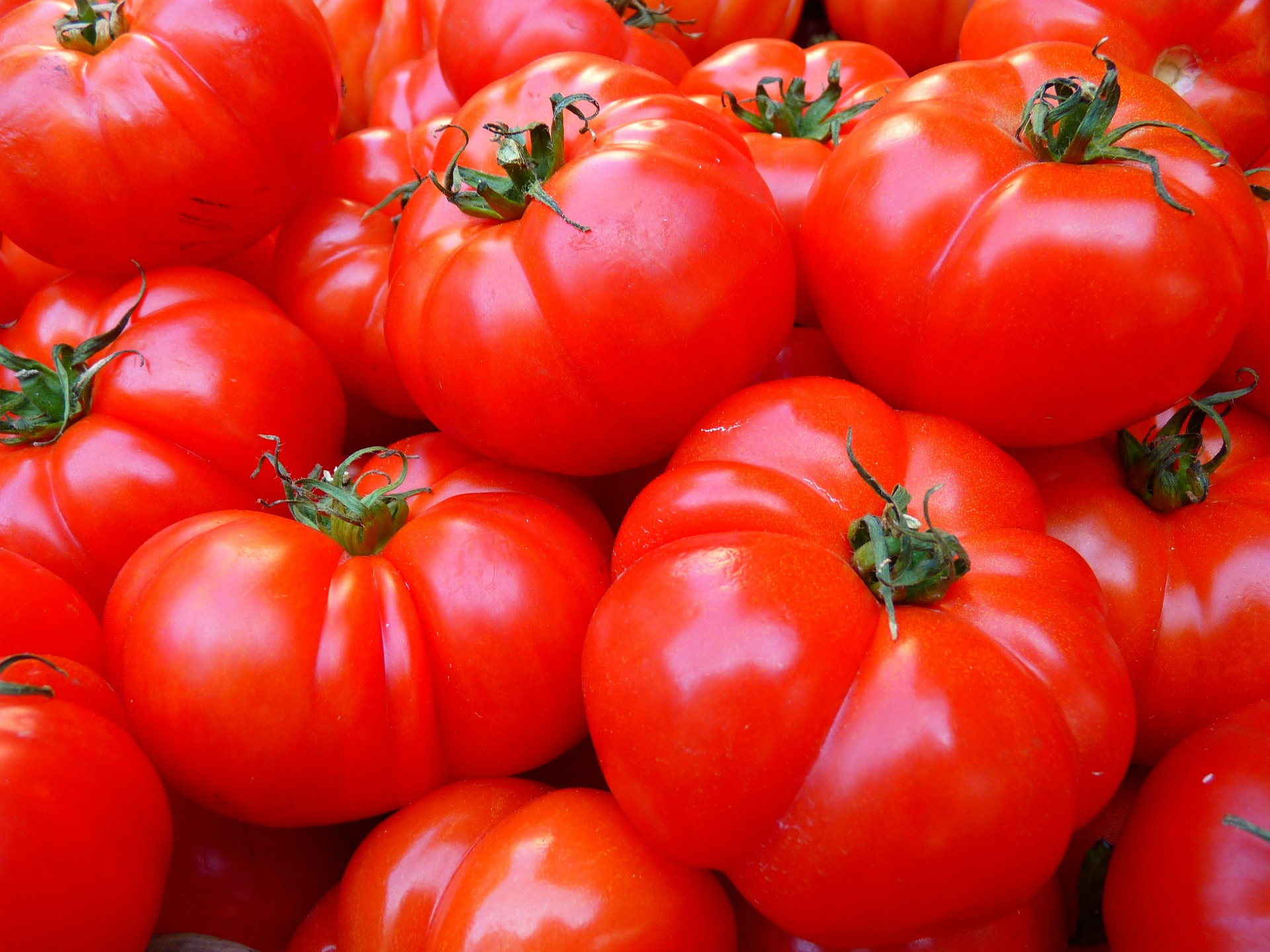 Uprawa własnych pomidorów w przydomowym ogródku